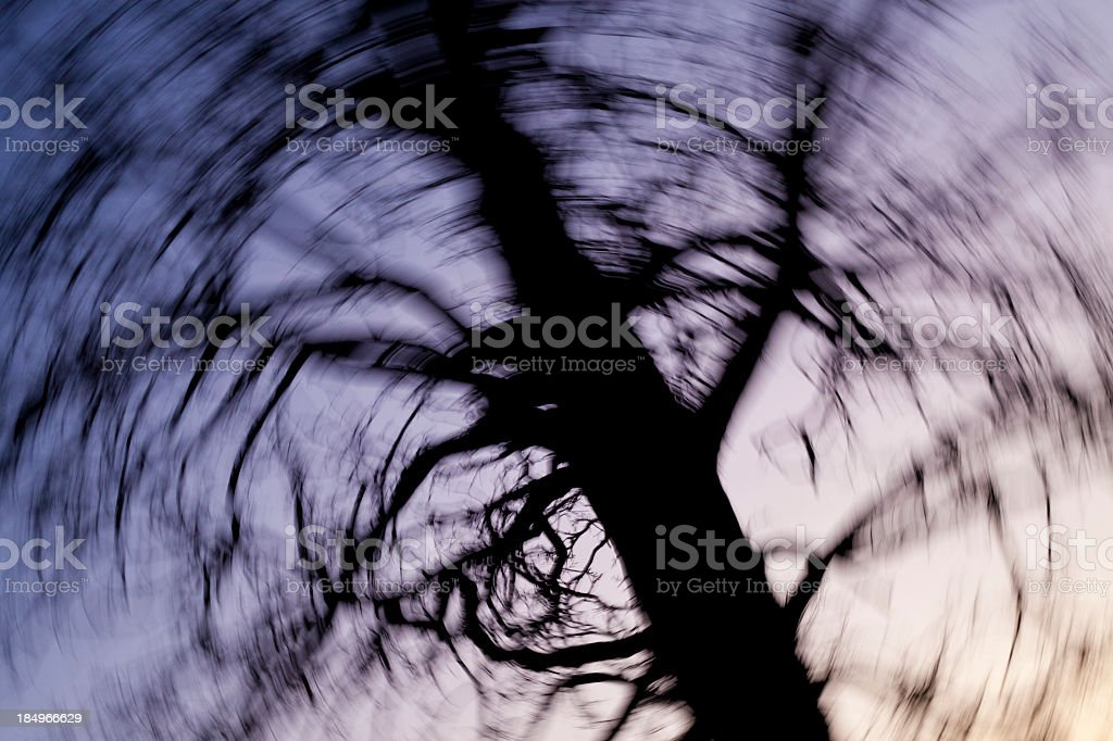 Blurry picture of a large tree at dusk stock photo