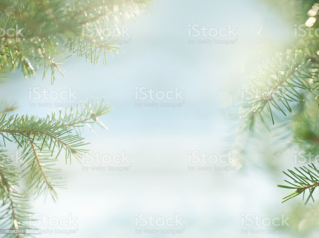 Blurry shot of pine trees and snow stock photo