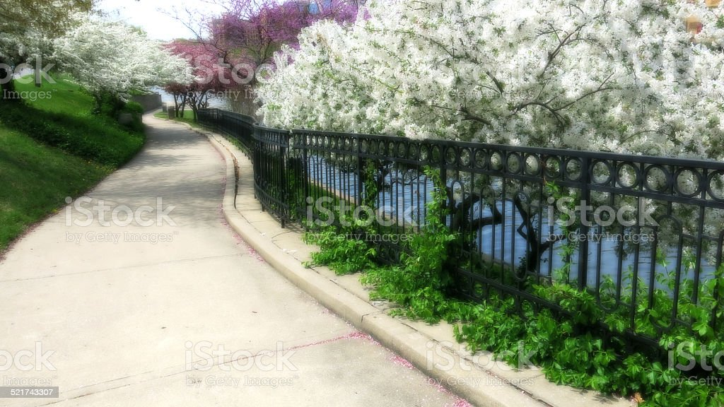 Blurry Sidewalk and Fence with White and Pink Flowering Trees stock photo