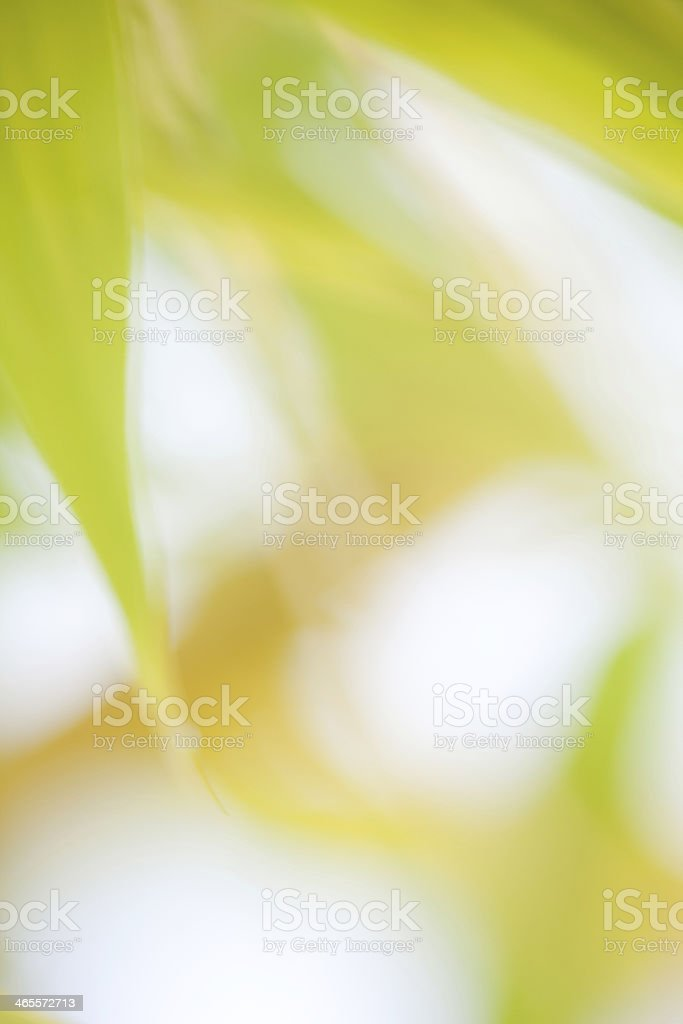 blurry soft green brown bamboo leaves for background stock photo