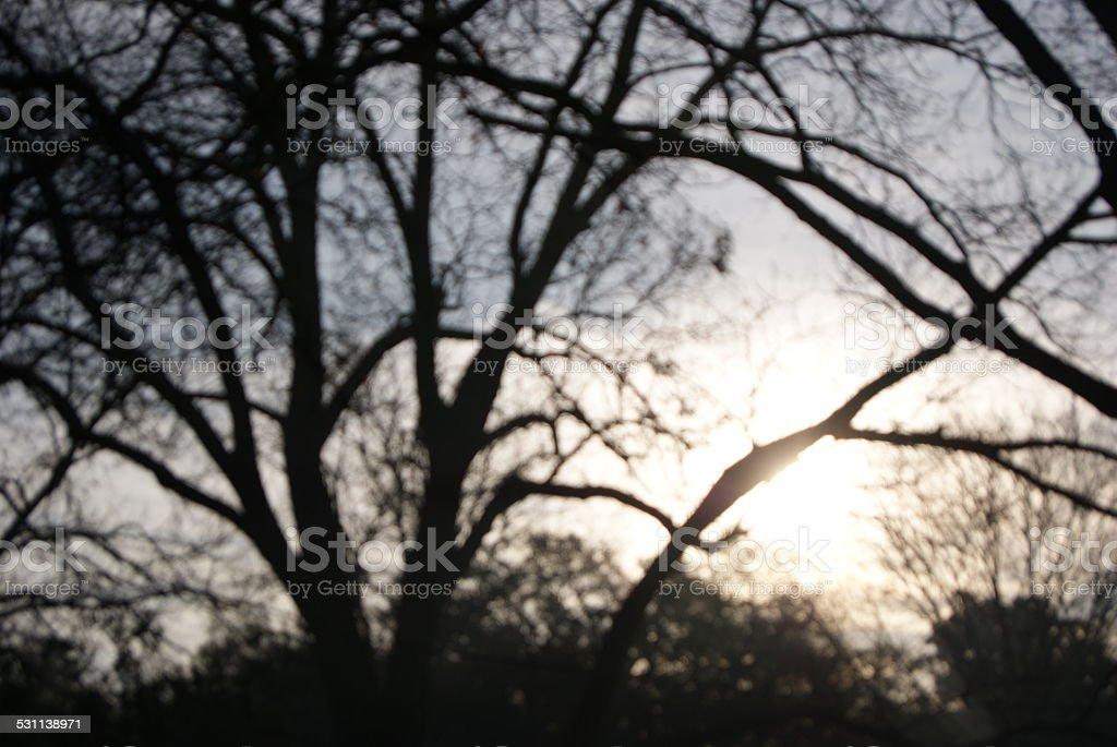 Blurry Winter Sunrise royalty-free stock photo