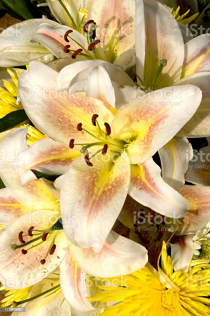 Blush pink lilies royalty-free stock photo