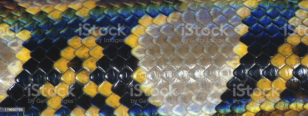 boa snake skin pattern texture royalty-free stock photo