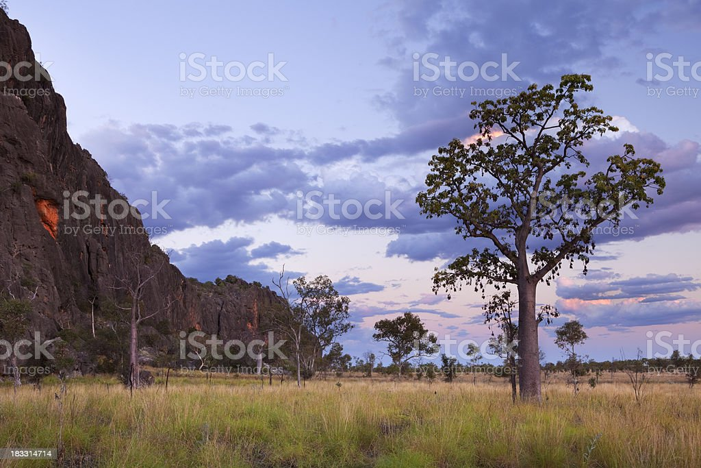 Boab trees at the Windjana Gorge, Western Australia at dusk stock photo
