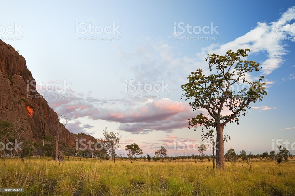 Boab trees at the Windjana Gorge, Western Australia at sunset stock photo