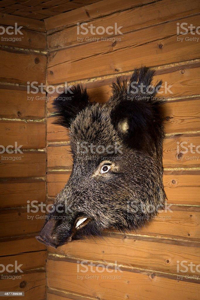 boar head on wall stock photo
