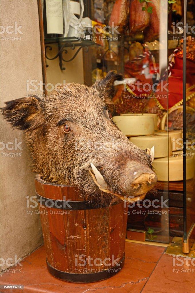 Boar stock photo