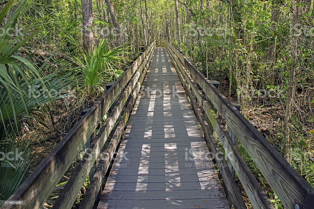 Boardwalk at Slough Preserve stock photo