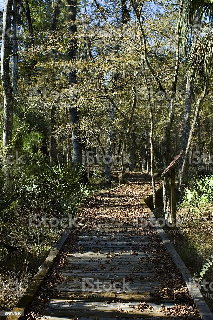 Boardwalk in Autumn royalty-free stock photo