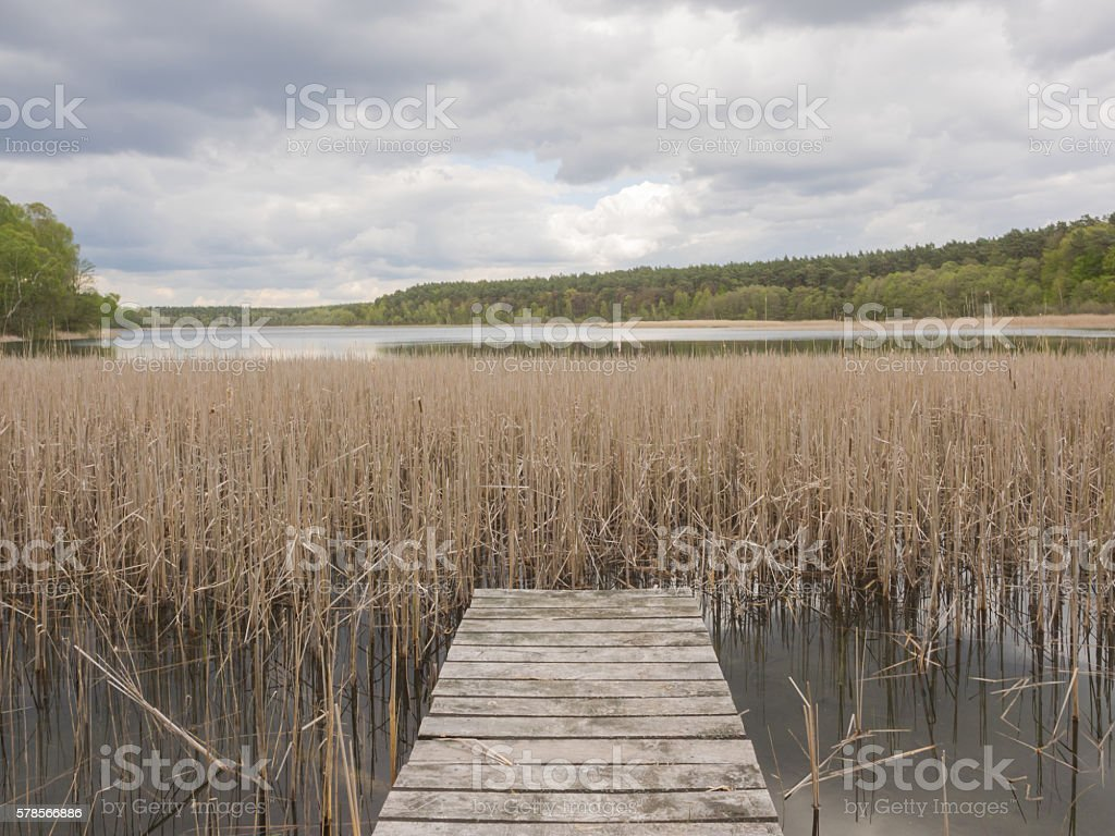 Boardwalk in between reed at a lake stock photo