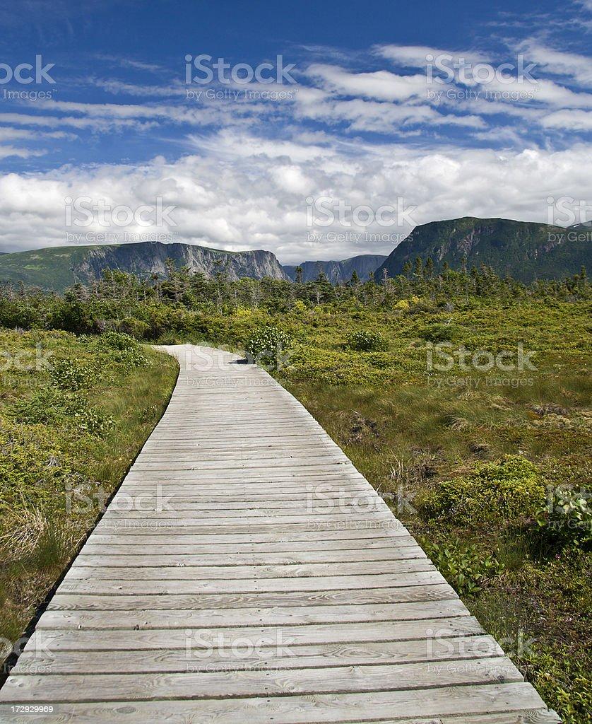 Boardwalk in Gros Morne National Park stock photo