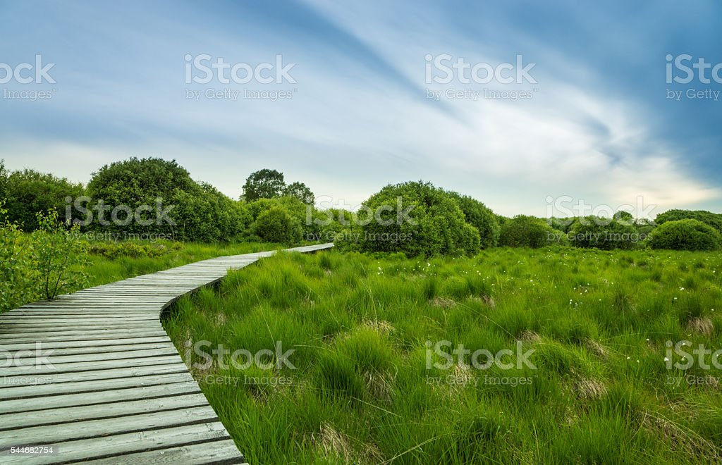 Boardwalk in Hautes fagnes Belgium stock photo