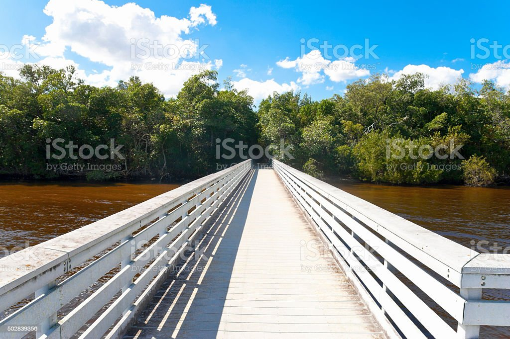 Boardwalk in the Mangroves stock photo