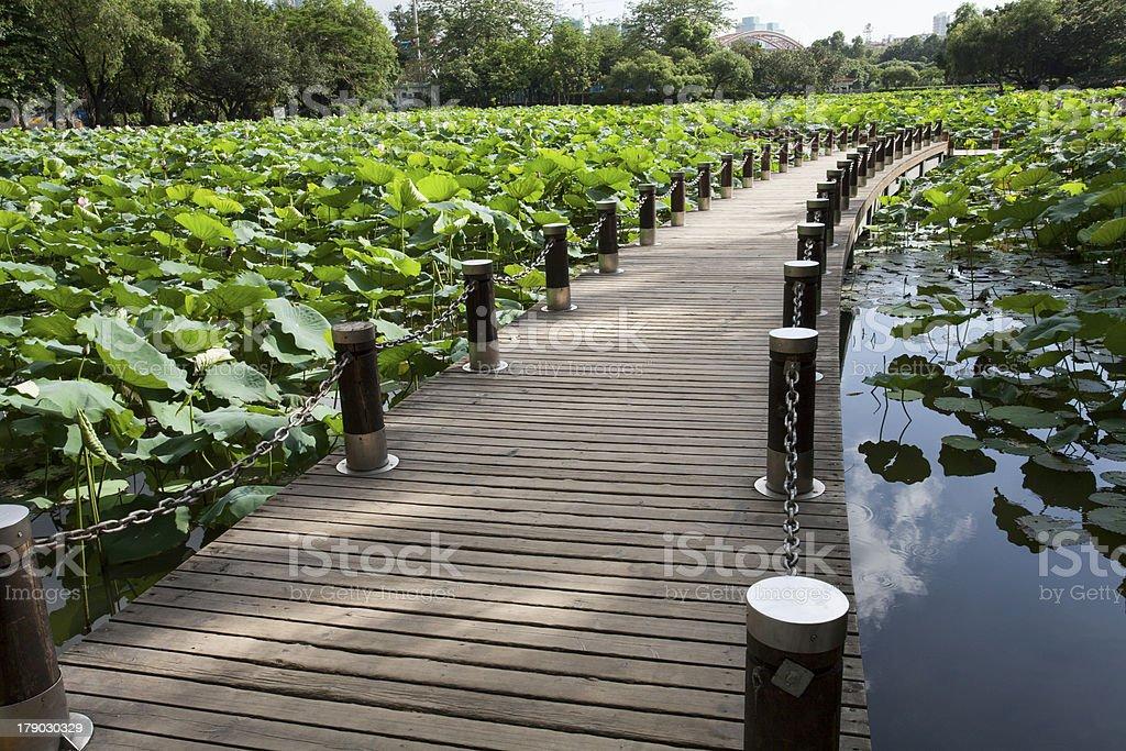 boardwalk on lotus pond royalty-free stock photo
