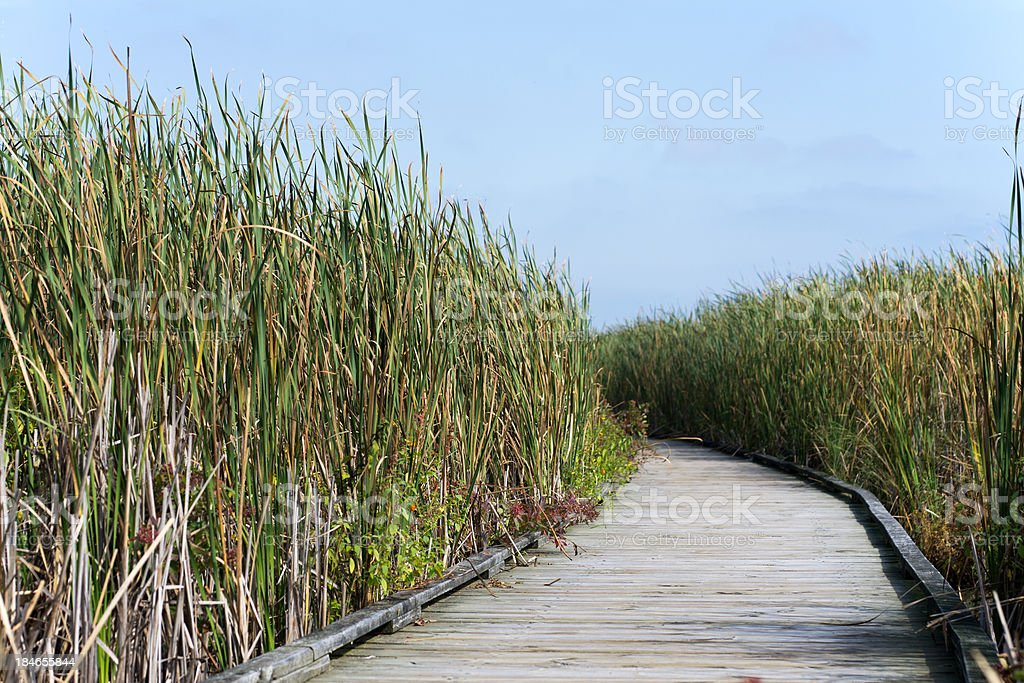 Boardwalk through a Wetland stock photo