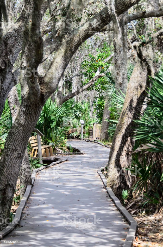 Boardwalk through Florida oak hammock stock photo
