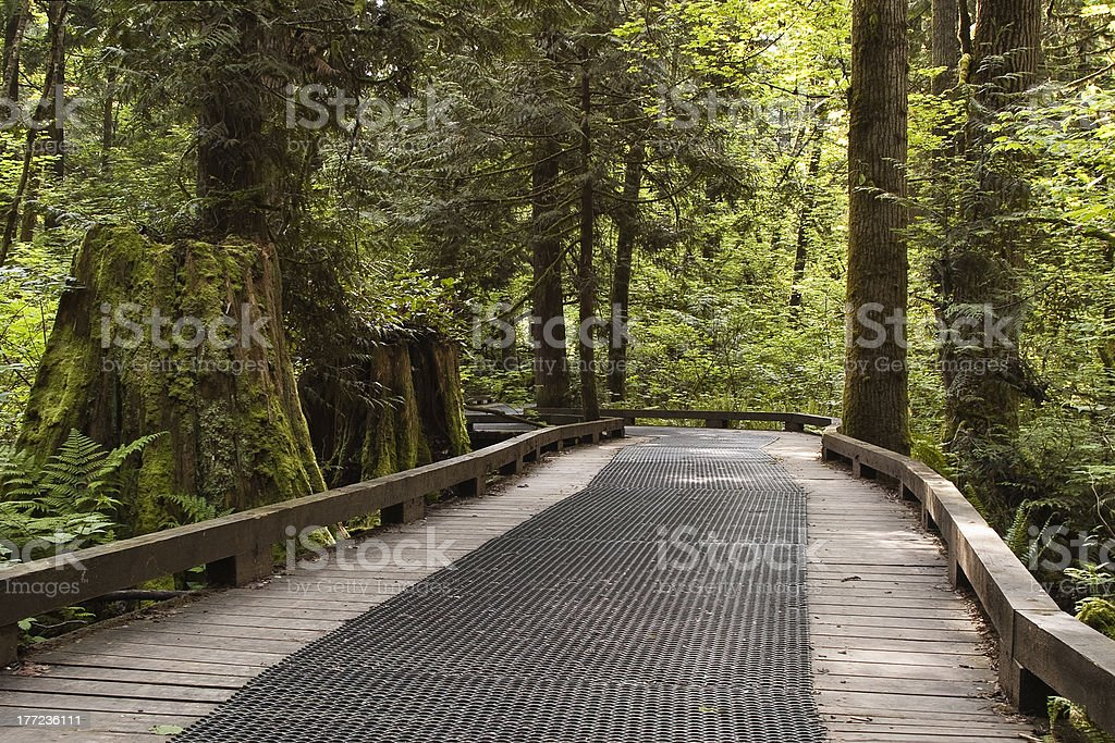 Boardwalk through Green Timbers Urban Forest, Surrey, BC stock photo