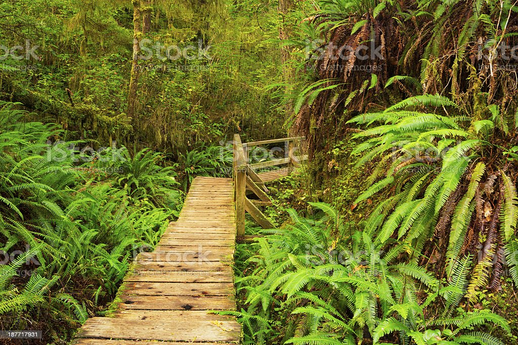 Boardwalk through lush rainforest, Pacific Rim NP, Vancouver Island, Canada stock photo