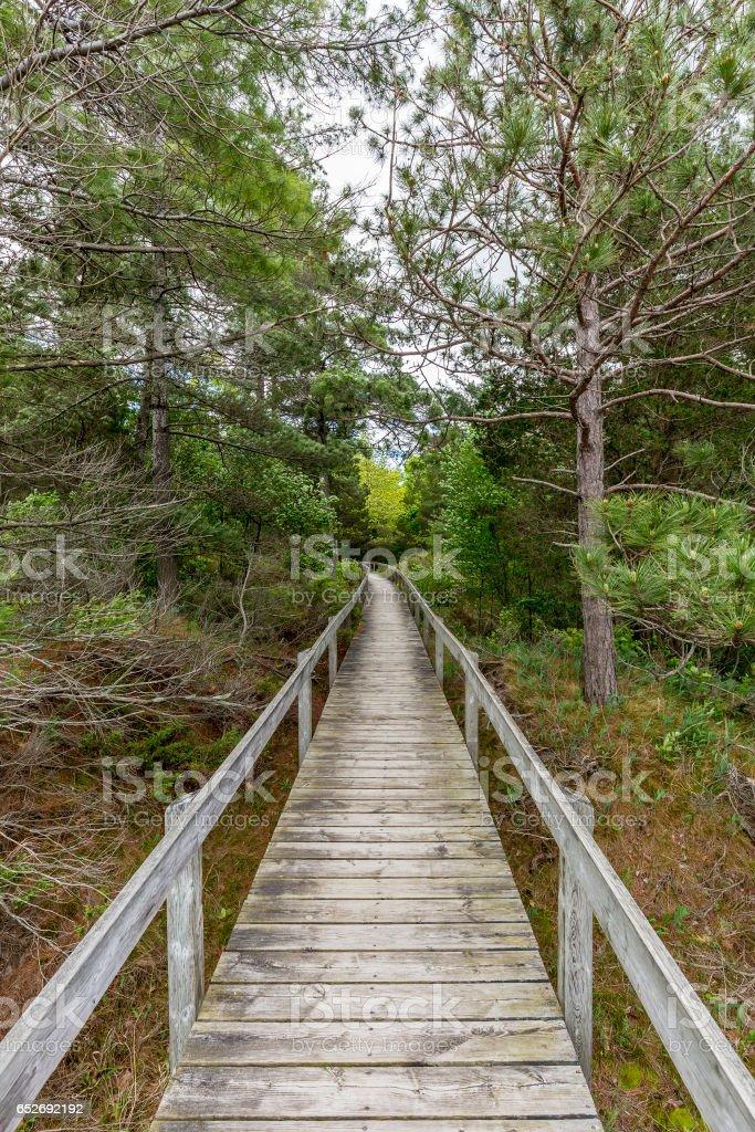 Boardwalk Through Oak Savanna - Pinery Provincial Park, Ontario, Canada stock photo