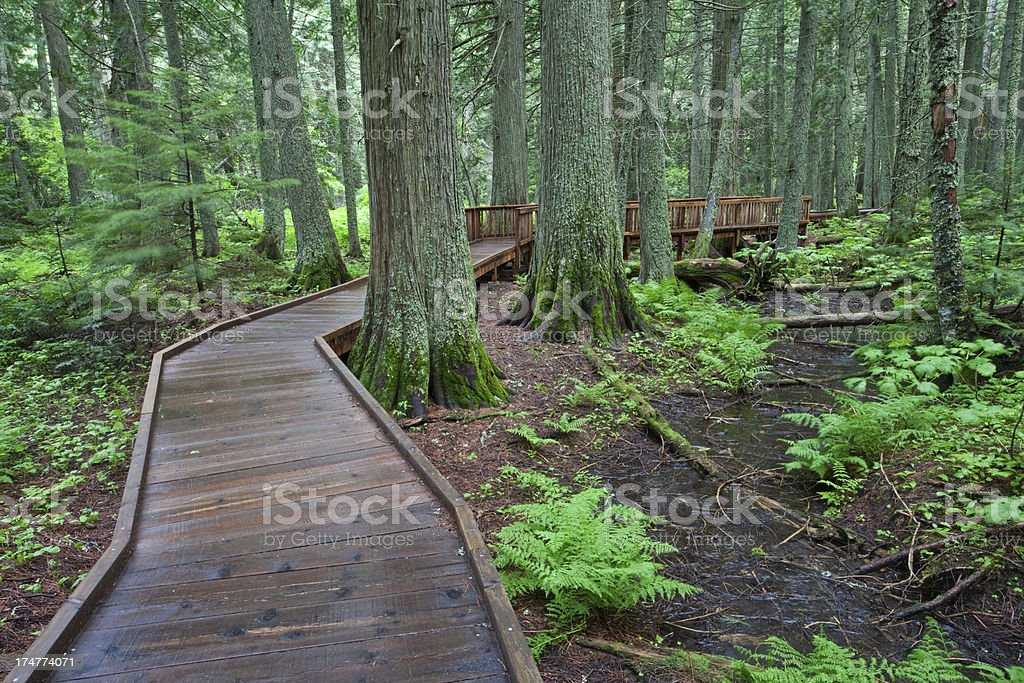 Boardwalk Through The Forest royalty-free stock photo