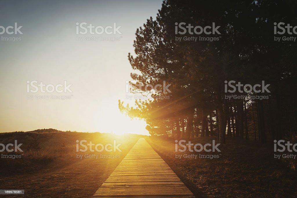 Boardwalk through the wood royalty-free stock photo