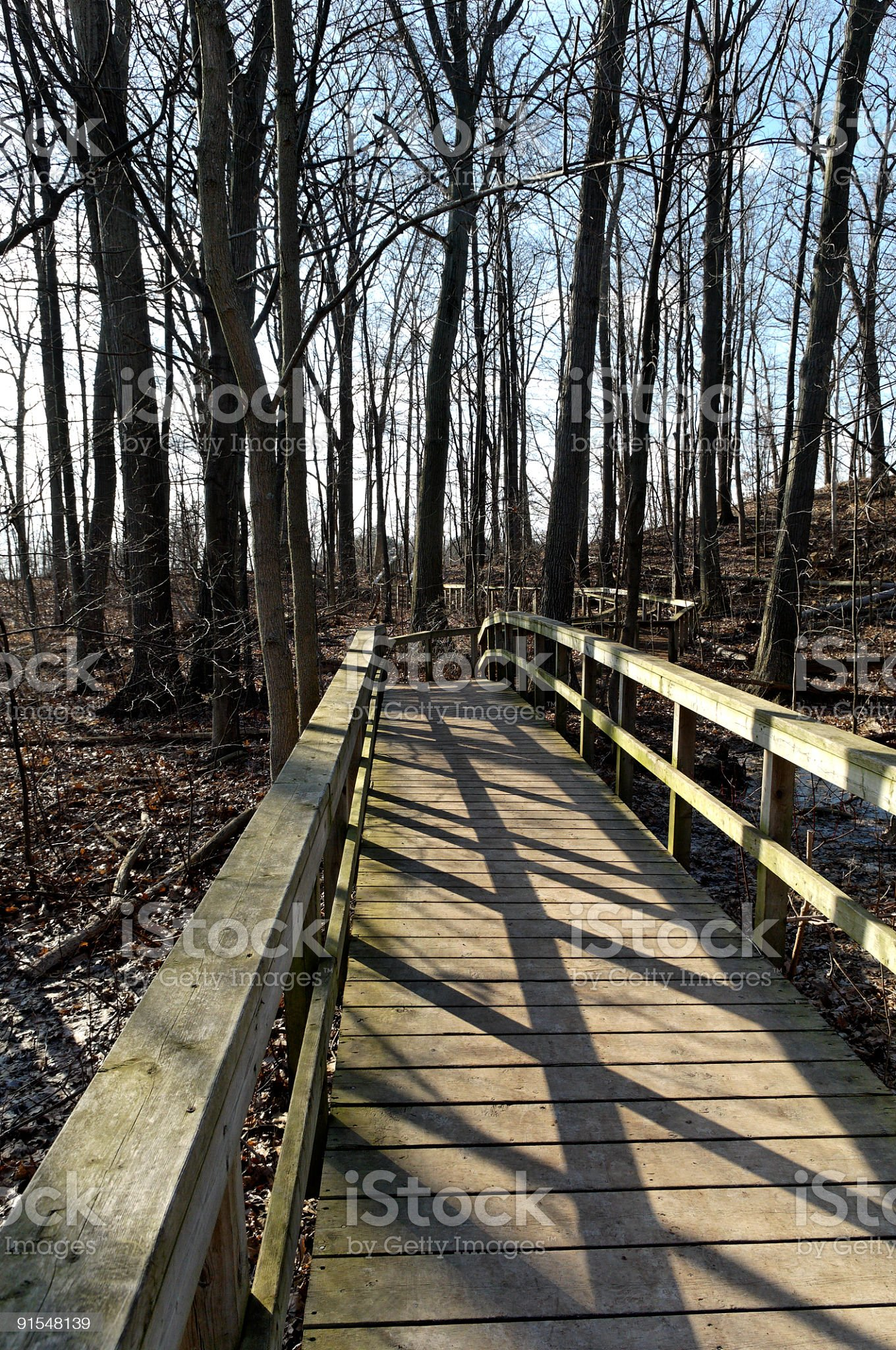 Board-walk thru' the woods royalty-free stock photo