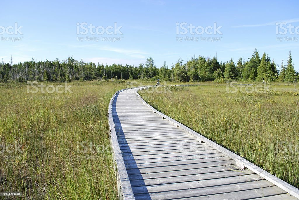 Boardwalk trail at the Bruce Peninsula National Park royalty-free stock photo