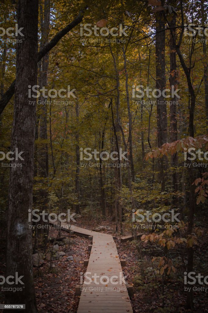 Boardwalk trail through the forest stock photo