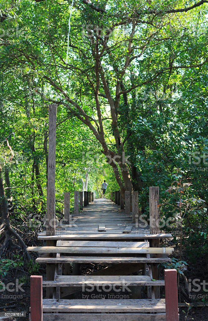 boardwalk wooden path over river surrounded mangrove forest stock photo