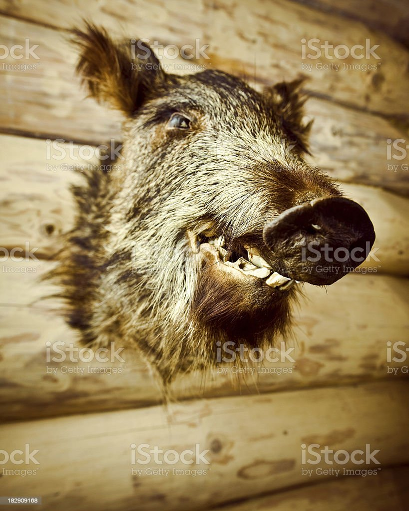 Boar's Head royalty-free stock photo