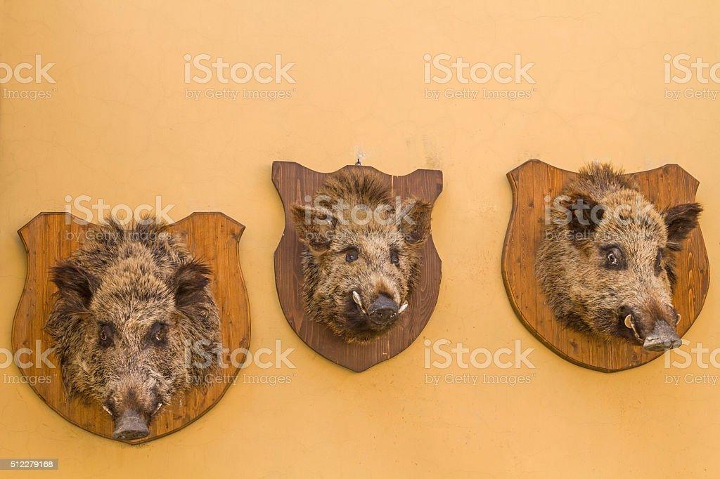 Boar's head stock photo