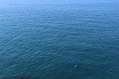 Boat Alone on Sea