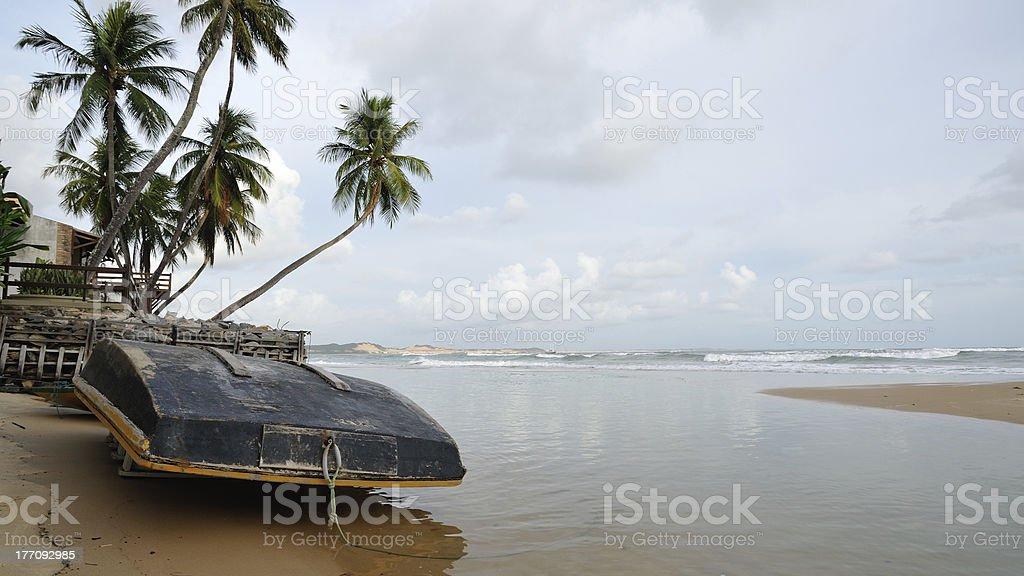 boat and palms at beach stock photo