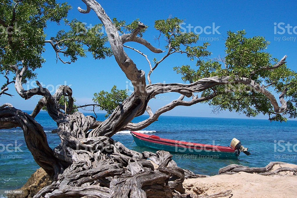 Boat and tree in Jamaica royalty-free stock photo