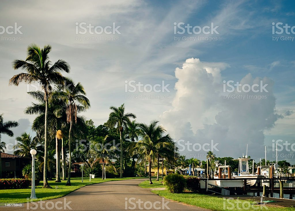 Boat Docks and Palm Trees stock photo