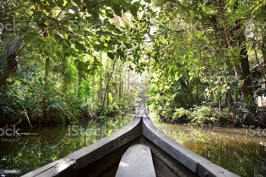 Boat in backwaters jungle stock photo