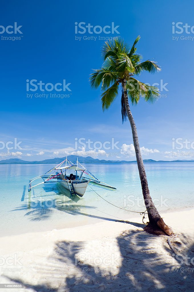 A boat rooted to a beautiful tree on a beach  royalty-free stock photo