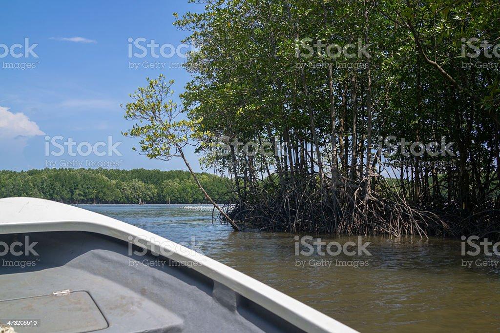 En bateau le long de la rive de mangrove photo libre de droits