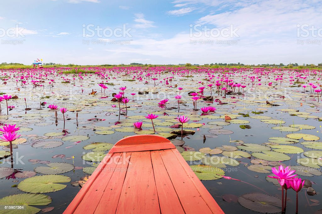 boat was sailing out into the Sea of red lotus. stock photo