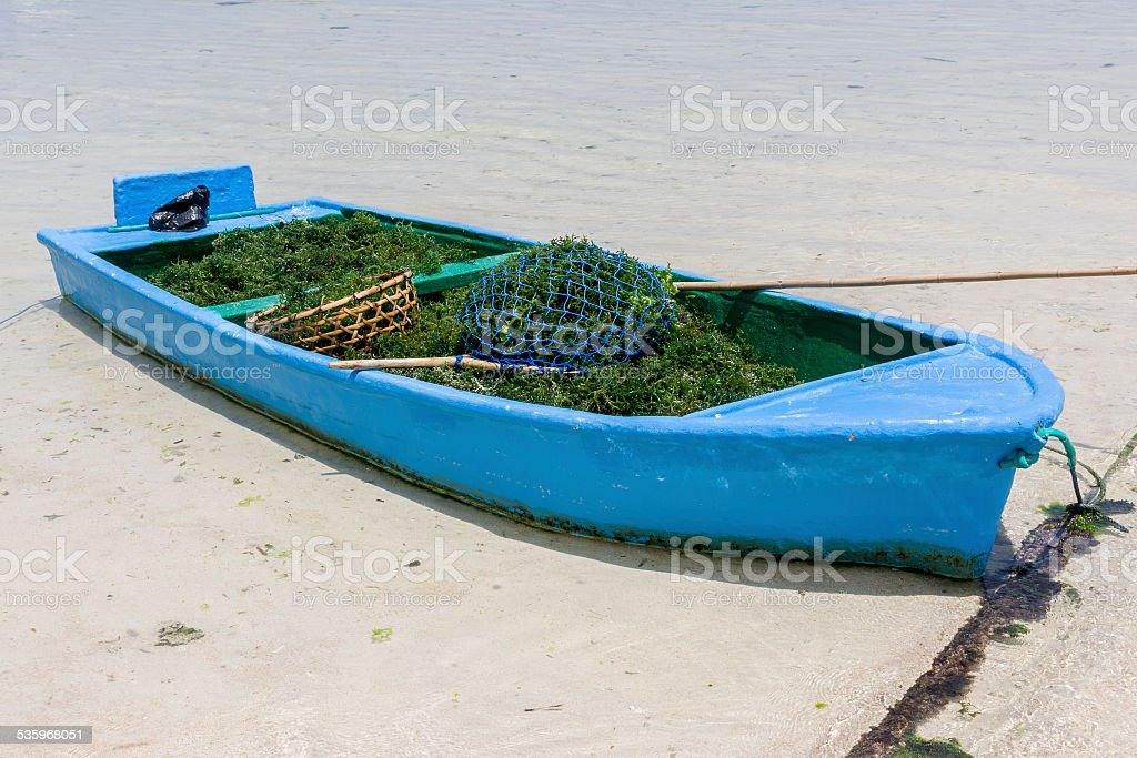 Boat with harvested seaweed on the island of Nusa Lembongan stock photo