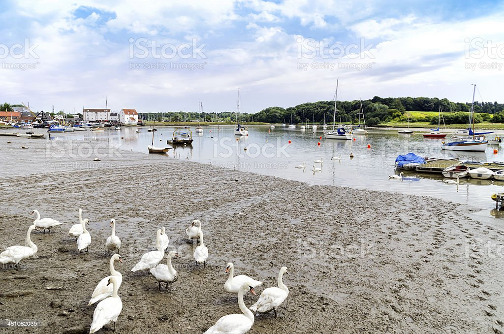 Boats and swans at Woodbridge stock photo