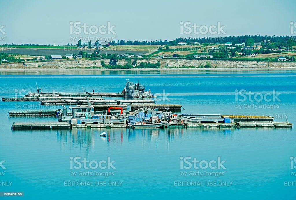 Boats harvesting mussels from rafts on Whidbey Island WA stock photo