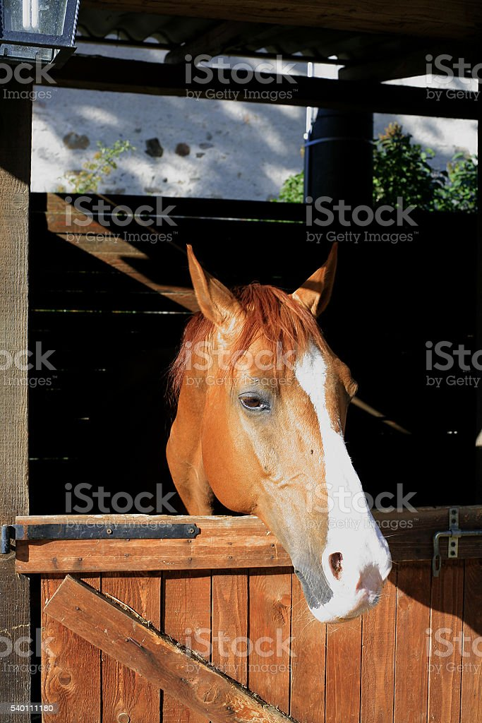 Bobbio (Italy). Horse in its stall stock photo