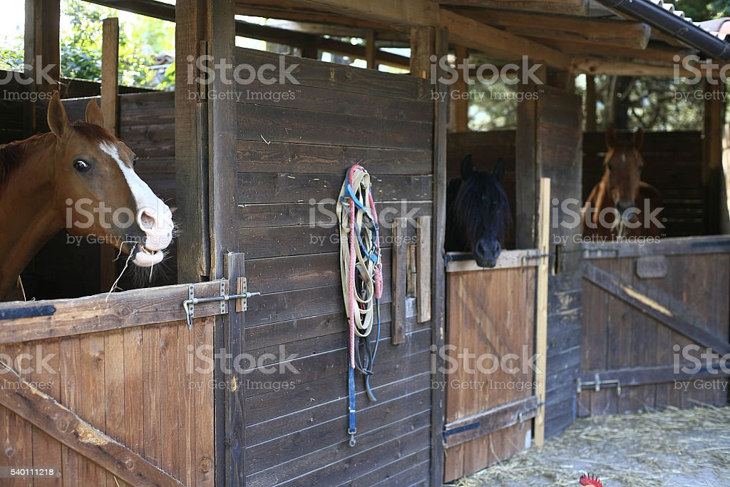 Bobbio (Italy). Horses in their stalls stock photo
