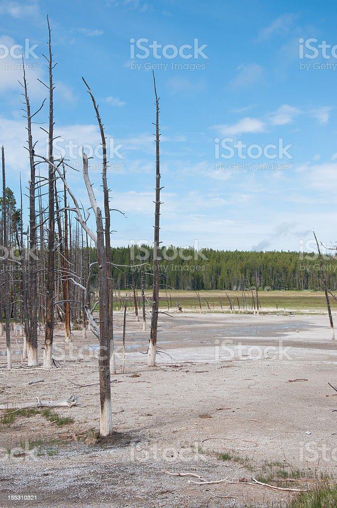 Bobby Sock Trees of Yellowstone stock photo