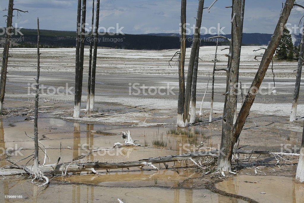 Bobby Sock Trees stock photo