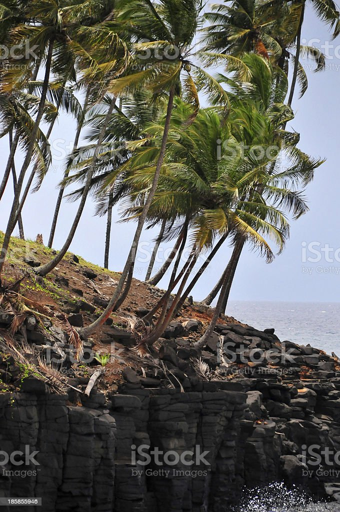 Boca do Inferno, Cantagalo district: windswept coconut trees stock photo