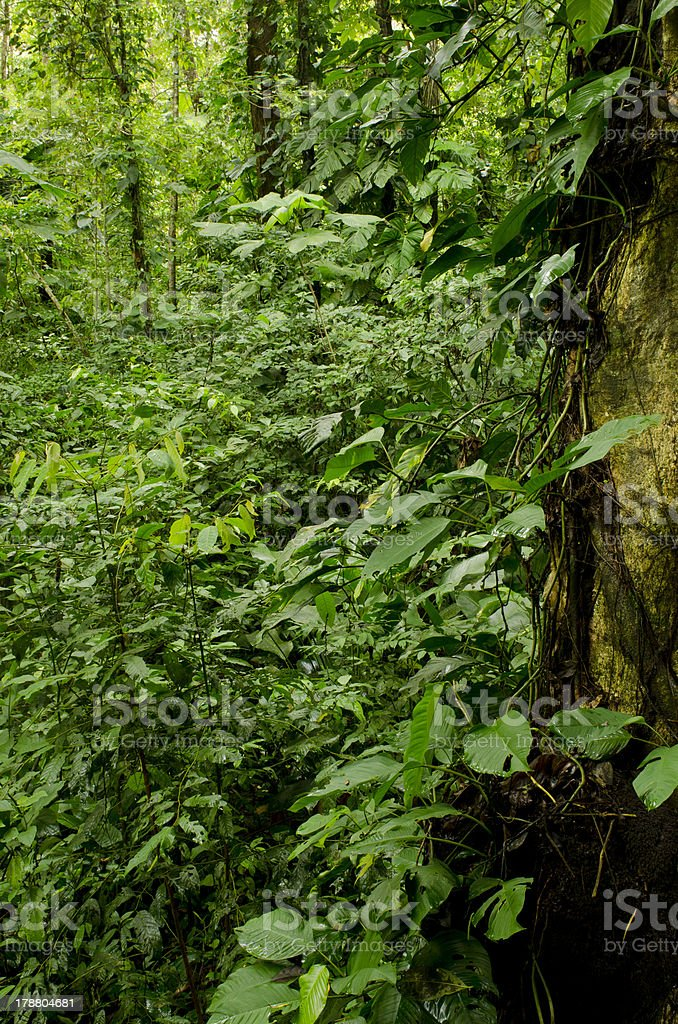 Bocas del Toro archipelago royalty-free stock photo