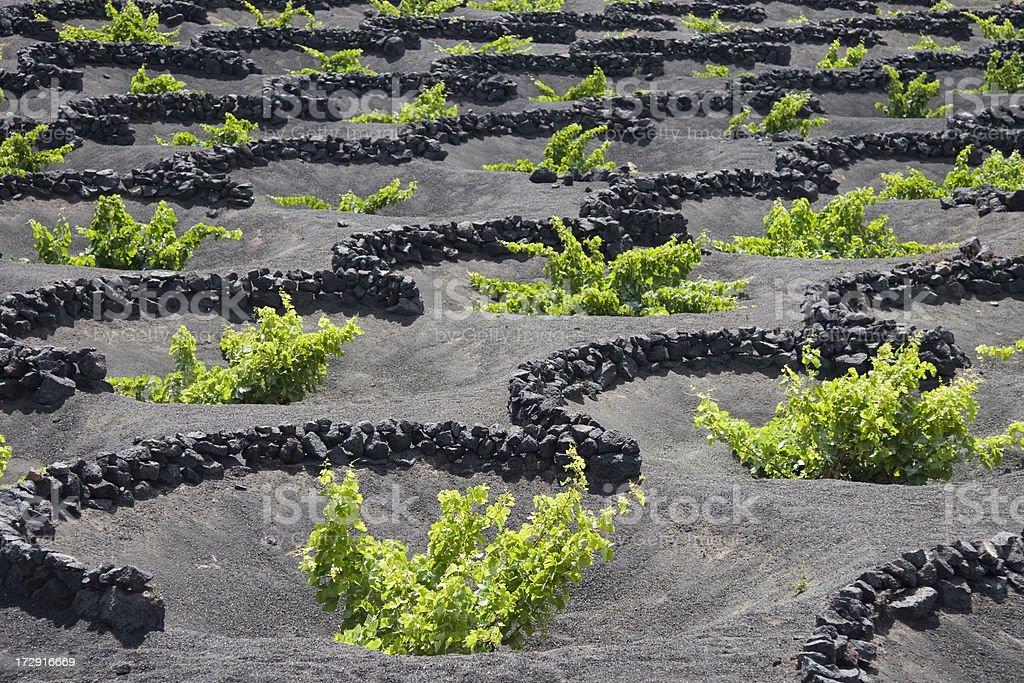 Bodega in Lanzarote stock photo