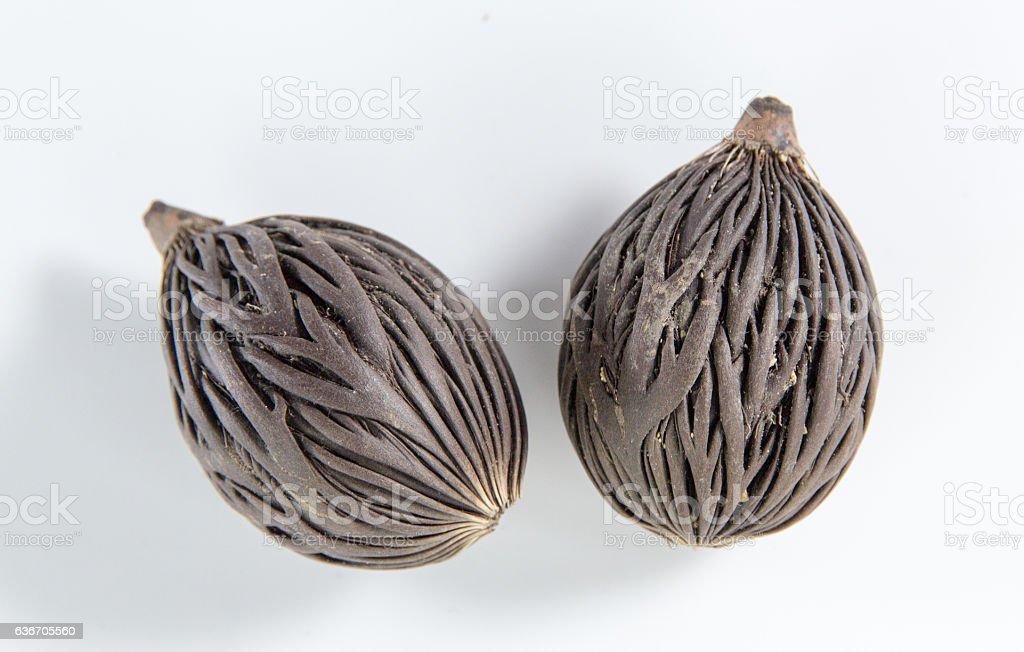 Bodhi Seed stock photo